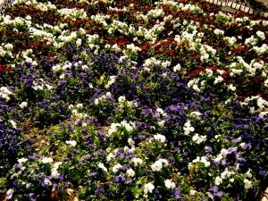 flower-bed2