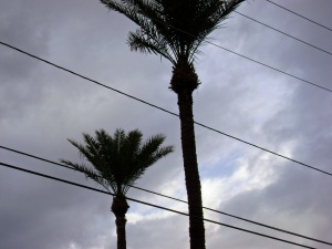 palms-and-clouds
