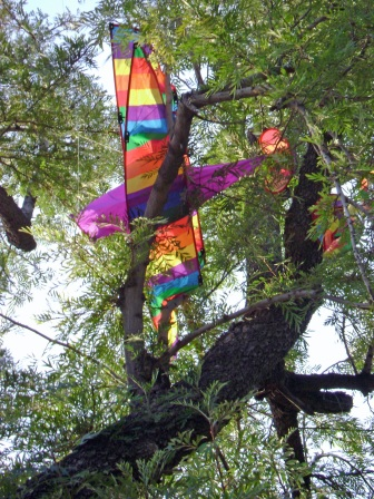 kite-in-tree-2