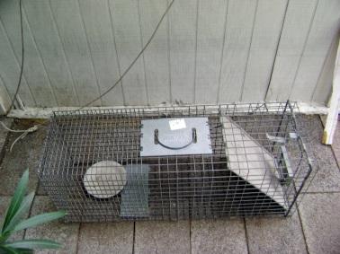 trap-cat