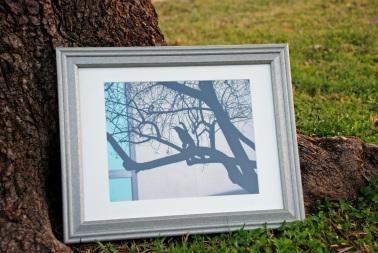 grackle-framed
