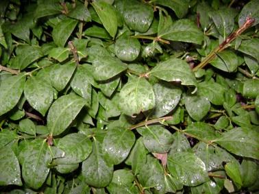 rain-on-leaves-2