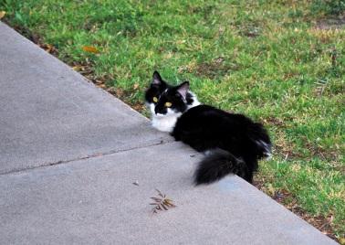 Edie Sidewalk