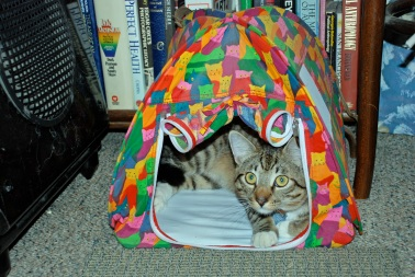 Goog in Tent 2