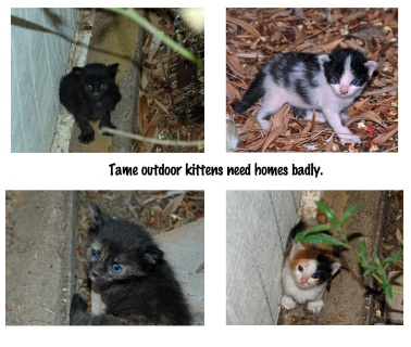 kittens cropped