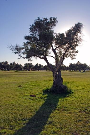 Olive on the Serengeti