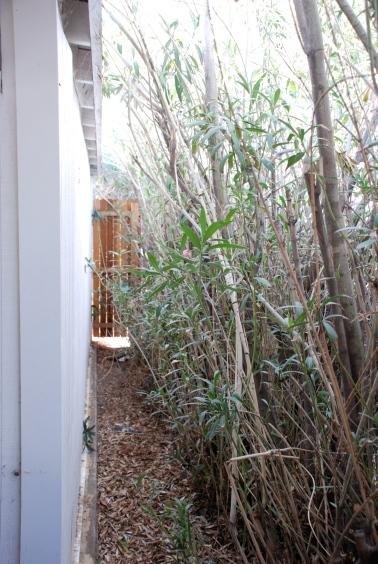 Sideshot oleanders