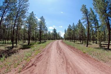 Pine on road