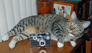 Solid Camera Solid Cat