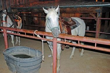 2 Horses 2