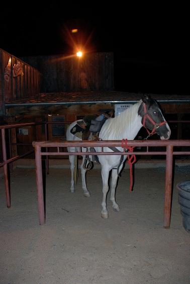 Big horse 2