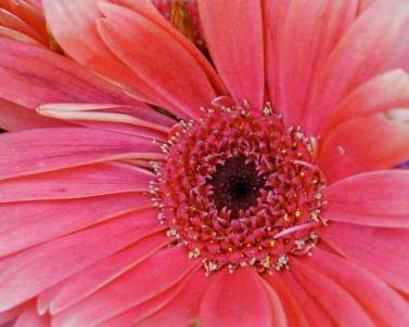 ch flower crop 2