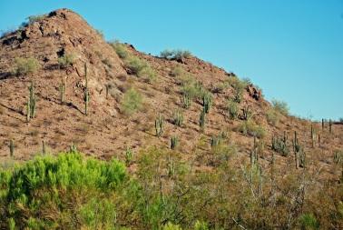 Saguaro Mtn