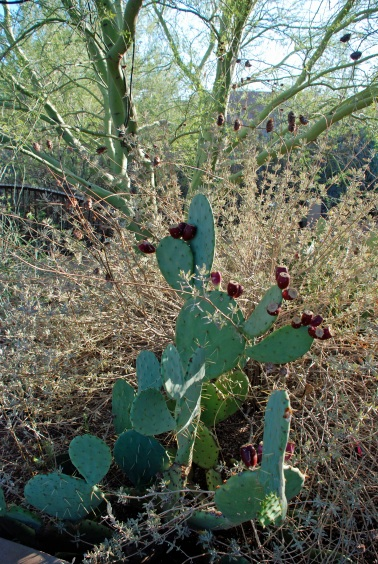 prickly 3