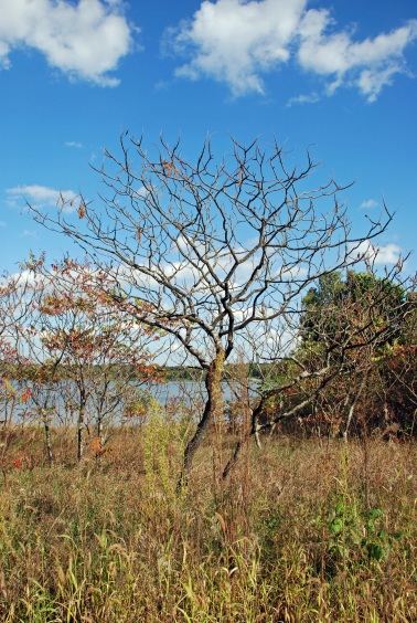 Tree at Lake
