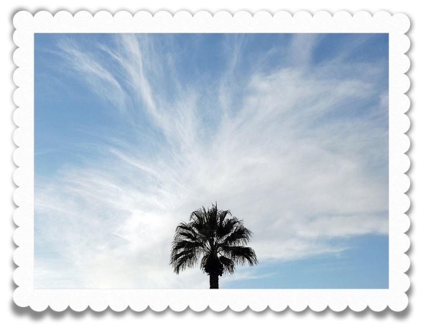DSC_0026_palm edge
