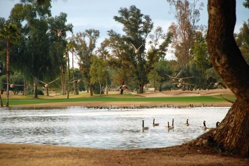 Ten Geese A-Landing