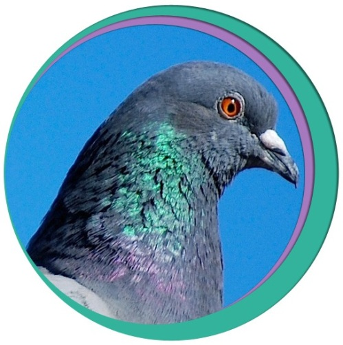 Pigeon circle