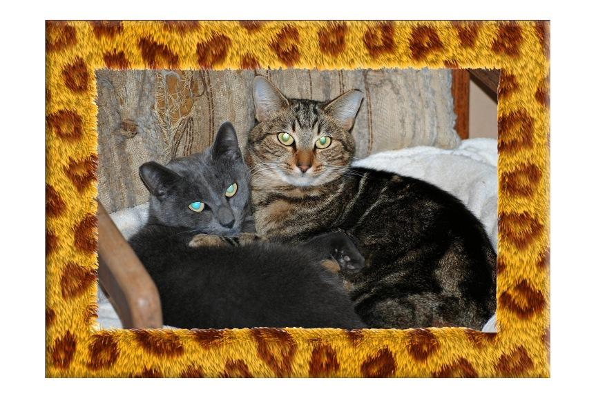 Cuddling in the Cat Cove