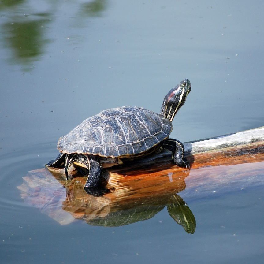 Pond Slider