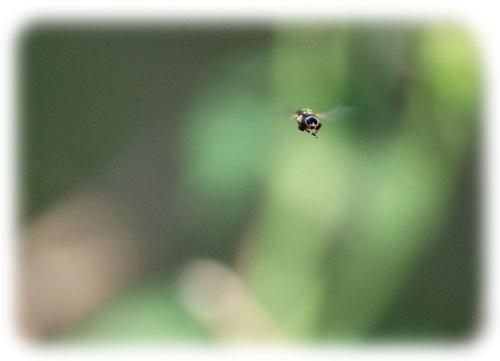 Bee Tiny_edited-2