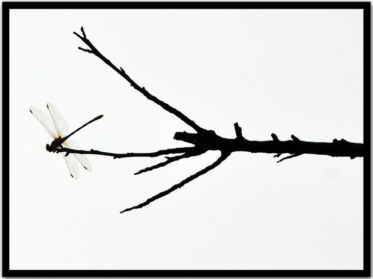 DSC_1387 frame