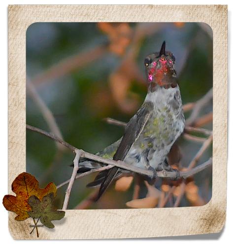 H-Bird 9.16.13 frame_edited-1