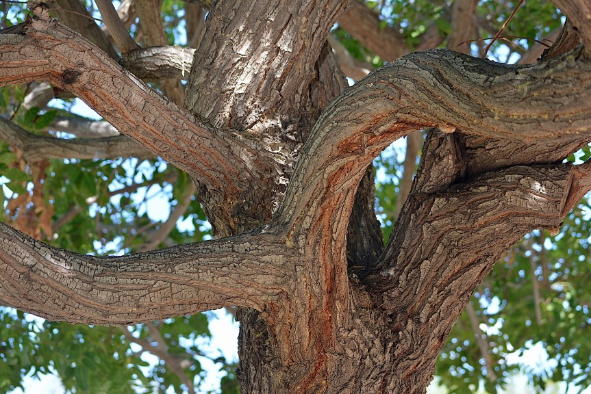 Tree Twists