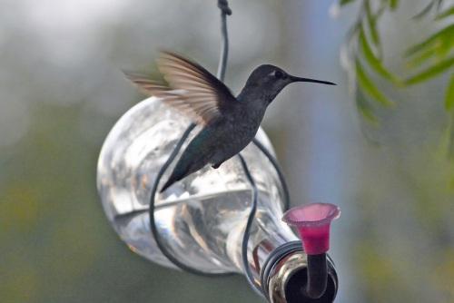 H-Bird 2.18.14