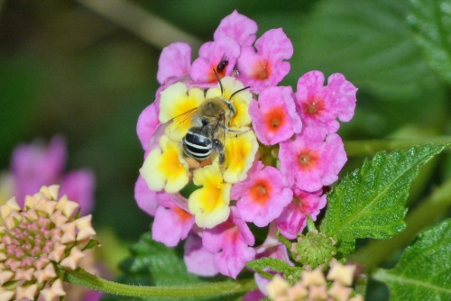 Bee 3.8.14