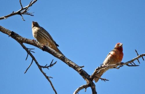 Finch Tree 2