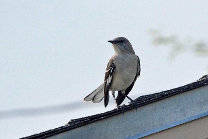 Mock on Roof