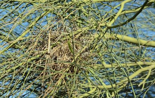 Palo Nest