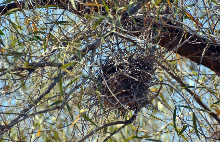 Nest_edited-1