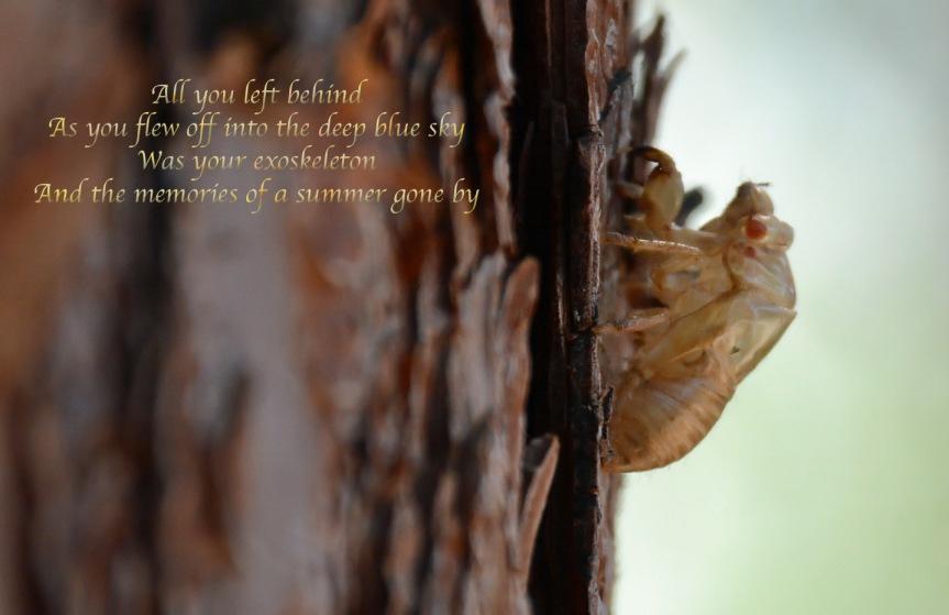 Cicada Exo with poem 7.13.14