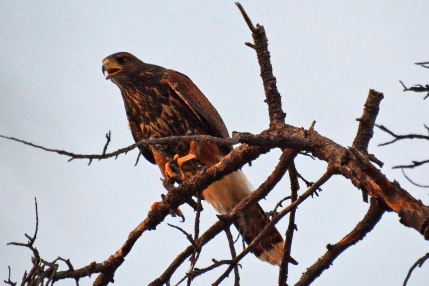 Hawk 2 7.9.14