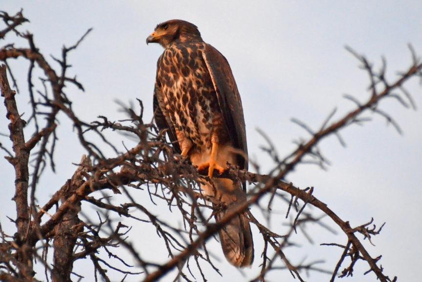 Hawk 7.9.14