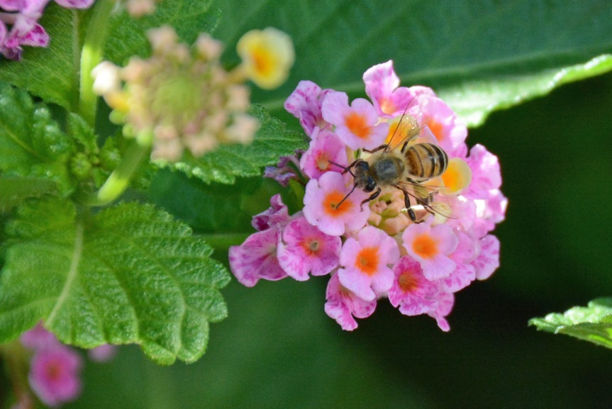 Bee 2 8.24.14