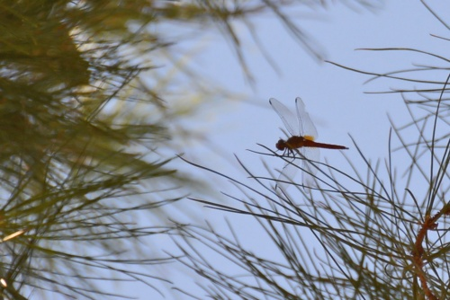 Dragonfly 8.15.14