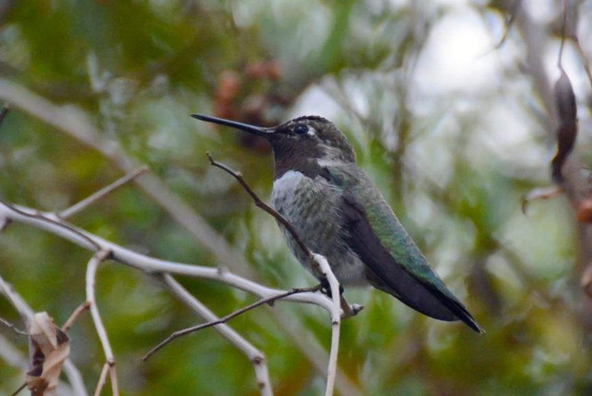 H-Bird 8.2.14