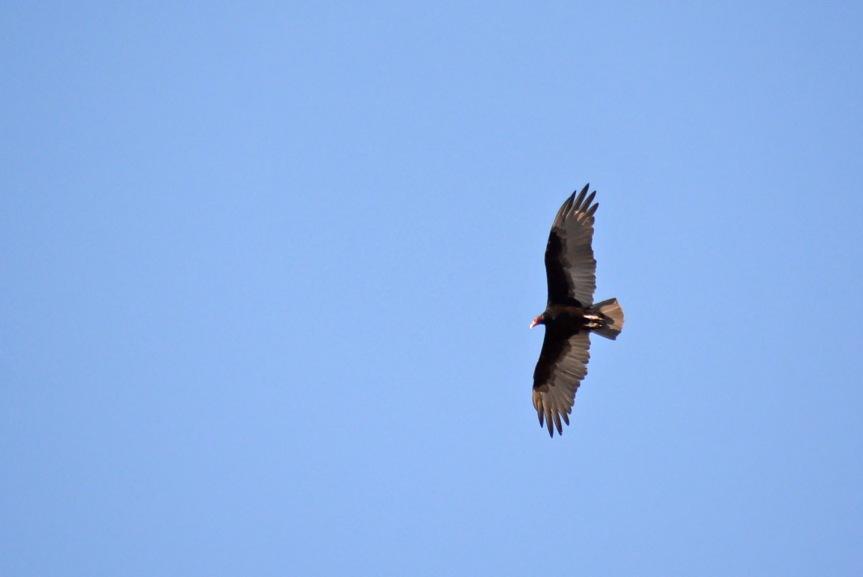 Hawk 8.15.14