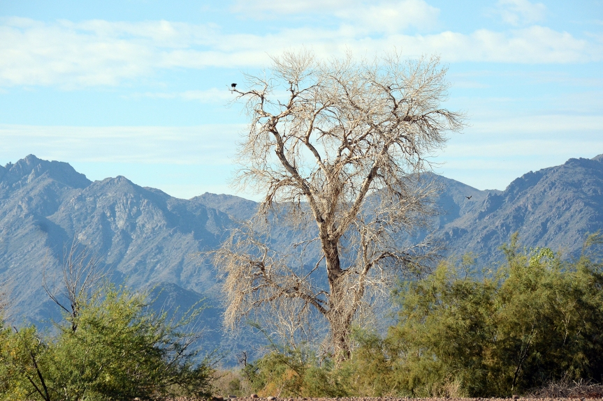 Dead Tree and Mtns