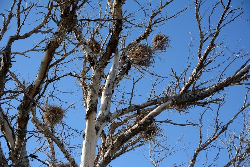 Nests Close