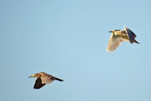 2 Flying