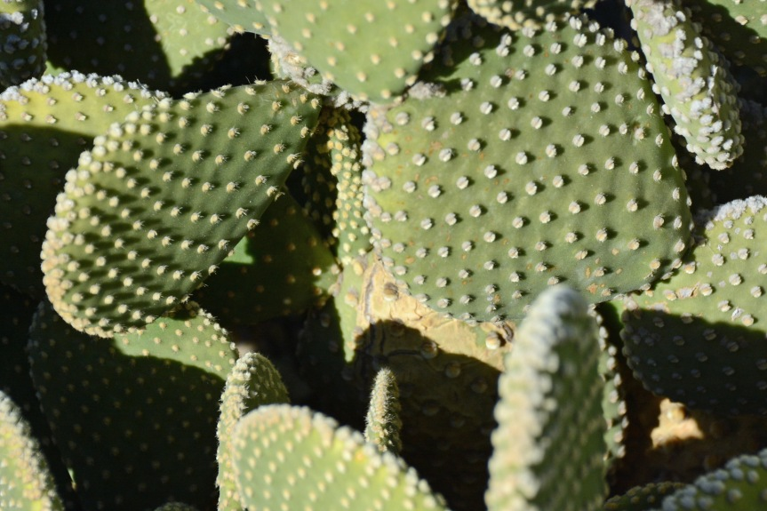 Cacti_edited-1