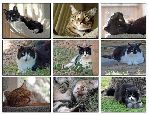 Cats x 9