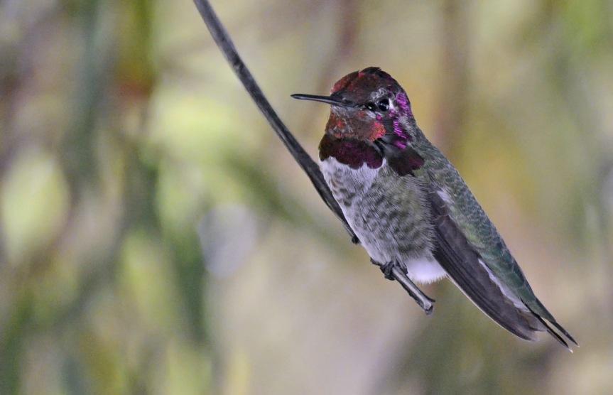 H-Bird 9.27.14