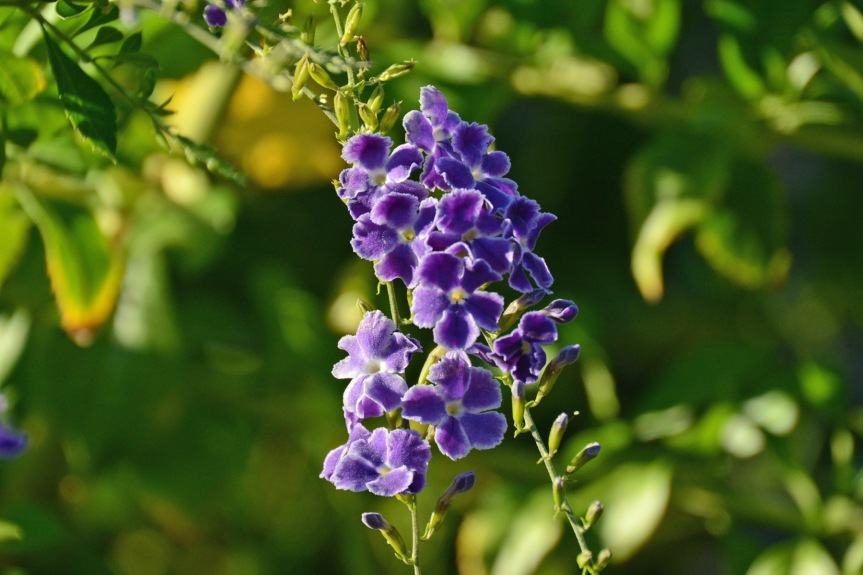 Purple_edited-1