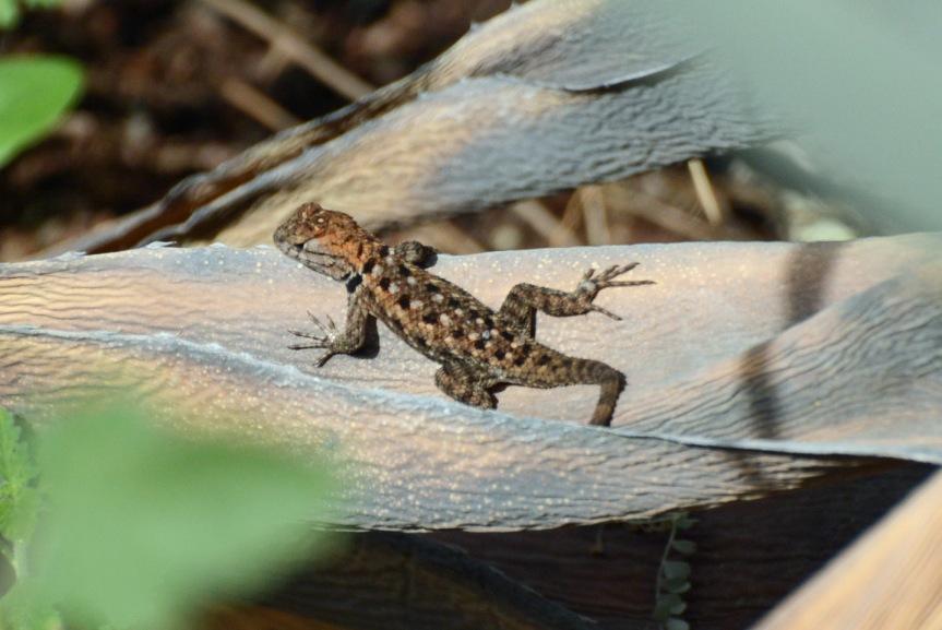 Spiny Lizard 2