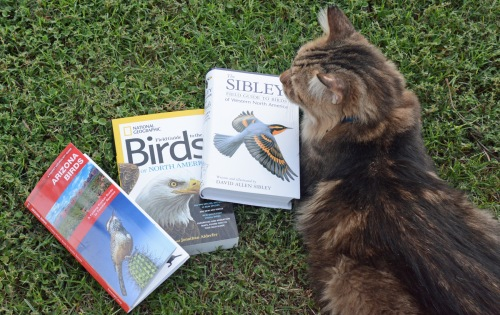 Sveng and Bird Books